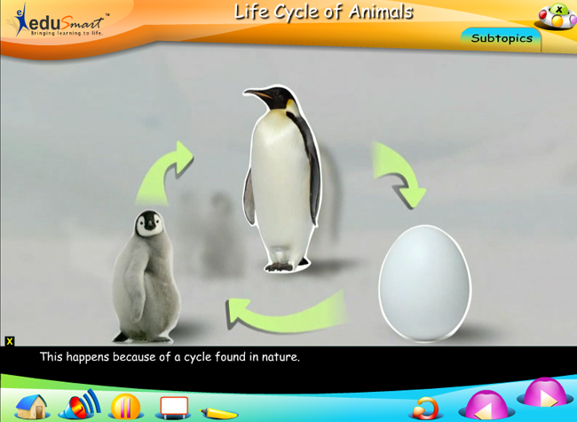EduSmart Science | Animal Life Cycle