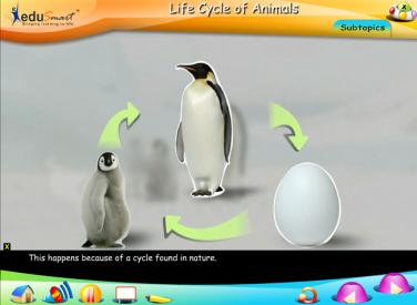 EduSmart Science   Animal Life Cycle